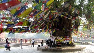 lumbini-bodhi-tree-2sm