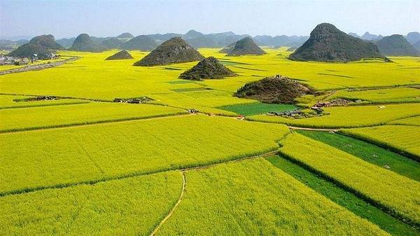Những cánh đồng hoa cải mênh mông trên hành trình Tây Tạng