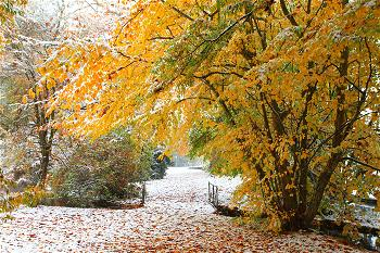 autumn-and-snow