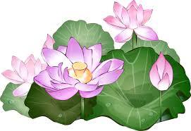 hoa sen tranh ve