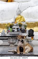 dog-at-temple