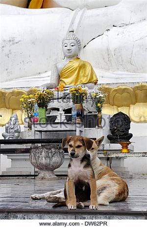 dog at temple