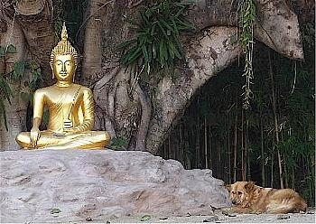 dog buddhism