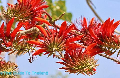 H 1 Hoa và cây mandarava