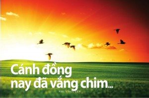 canh-dong-vang-chim-300x197