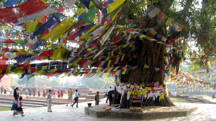 lumbini-bodhi-tree-2