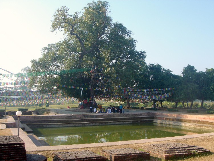 lumbini-bodhi-tree-1